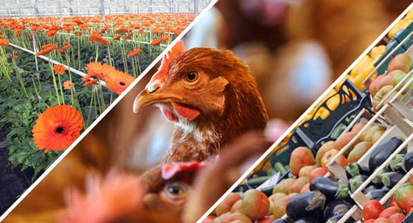 ReSPR Alimentación y agricultura
